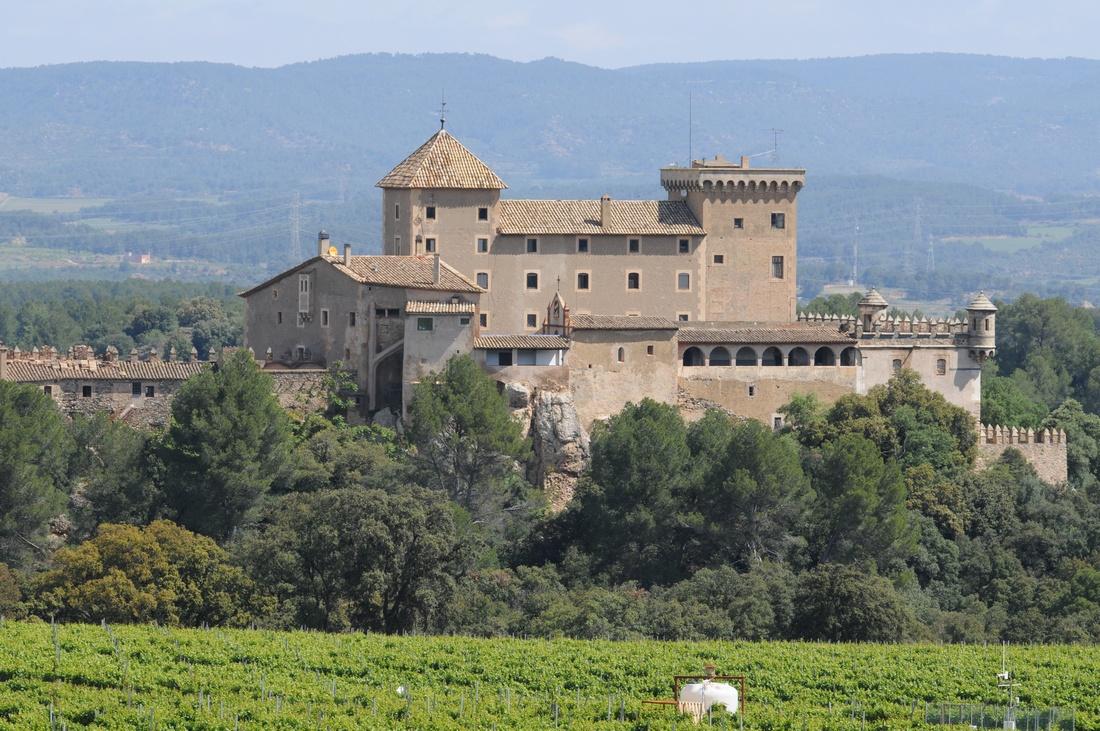 Visita privada y degustación de vinos